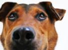 Perros: consejos contra los golpes de calor