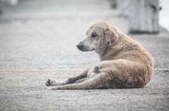 Los perros de Gaza ya tienen refugio