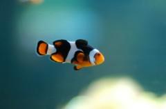 Gasta 500 dólares… Para salvar a su pez