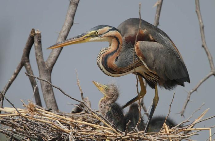Las aves de la Albufera de Valencia se recuperan
