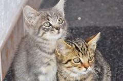 Parásitos externos en gatos, esos bichos peligrosos