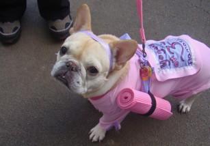 Body Dog, así es el primer gimnasio para perros