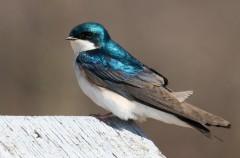Las aves prefieren comida de calidad antes que cantidad