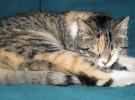 Estas son las razones por las que los gatos duermen mucho