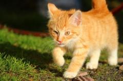 Alergia a los gatos, menos peligrosa de lo que parece
