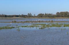 El proyecto gasístico de Doñana podría destruir este entorno