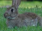 Conejos ¿pueden ser mascotas?