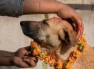 Kukur Tihar, una fiesta dedicada a los perros