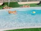 Tenerife tiene el hotel para perros y gatos más lujoso de Europa
