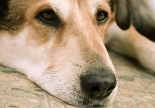 Las mascotas ya pueden ser sepultadas con sus dueños