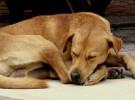 Diabetes para perros, una enfermedad muy peligrosa