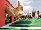 Argentina prohíbe las carreras de perros