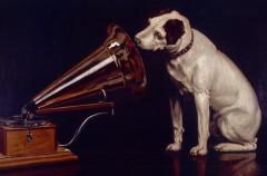 Según un estudio, los perros prefieren escuchar Reggae y Rock