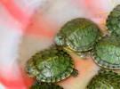 Cuidados generales para las tortugas