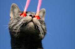 ¿Por qué los gatos están obsesionados con los punteros láser?
