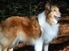 La quimioterapia también se puede aplicar en los animales domésticos