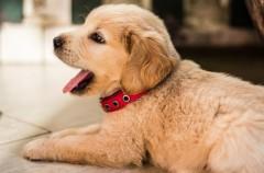 Sorprendente: tres cachorros consiguen sobrevivir en un hotel sepultado