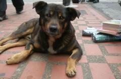 Argentina: las personas que tengan perros callejeros pagarán menos impuestos