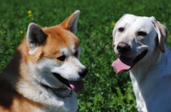 Nombres de perros muy originales… y con significado