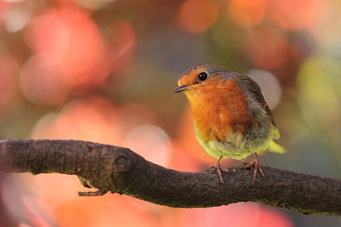 Tips para cuidar a nuestras aves