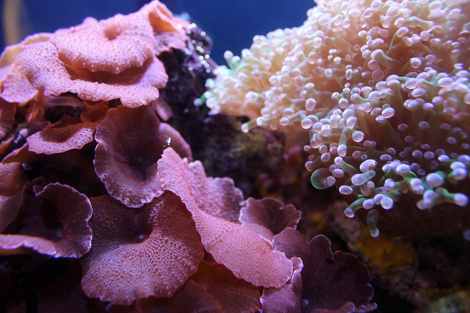 Espectaculares ecosistemas marinos