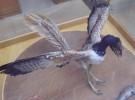 Los dinosaurios no desarrollaron las plumas para volar