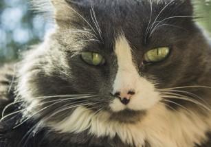 Consejos para acostumbrar a tu gato al transportín