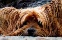 Algunos alimentos que puedes compartir con tu perro