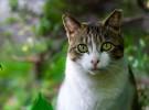 Ailurofilia, el amor por los gatos