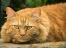 Un estudio demuestra que los gatos son más inteligentes de lo que pensábamos
