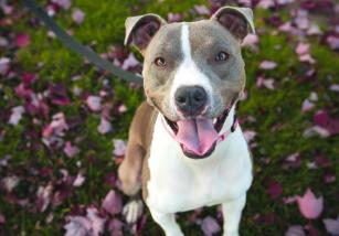 Adoptar un perro: conceptos legales a tener en cuenta