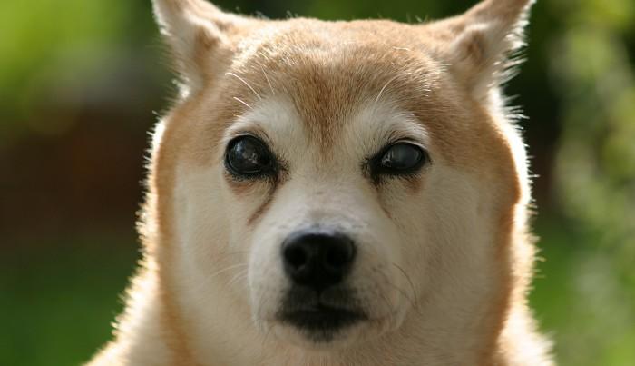 Caso sorprendente: Un perro invidente es rescatado por un bombero