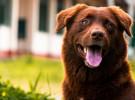 Estos consejos ayudarán a prevenir el cáncer en los perros