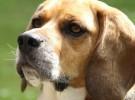 Cómo tratar la epilepsia en los perros