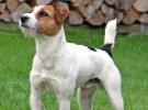 Quimioterapia para mascotas: ¿resulta realmente fuerte?