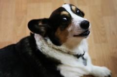 Si el perro está nervioso, vosotros podríais ser la razón