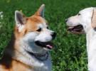 Los perros mudos existen: animales que no saben ladrar