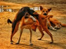 México aumenta la protección a los animales y prohíbe las peleas de perros