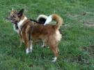 Saltan las alarmas: cada vez se roban más perros en los parques españoles