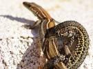 Tragedia en Knoxville: 33 reptiles mueren de manera inesperada