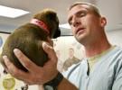 Consultas veterinarias online, existen y ya son un éxito