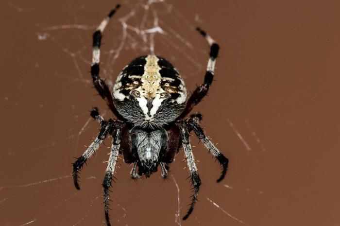 Puntos para tener en cuenta en el caso de una picadura de arañas