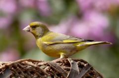Los beneficios de observar aves