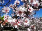 Primavera: la vida regresa a la naturaleza