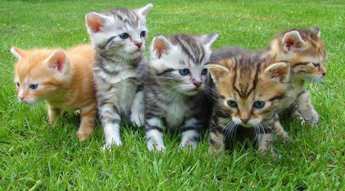 Tips para alimentar a tu gato