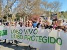 La defensa del lobo ibérico reúne a miles de manifestantes en Madrid