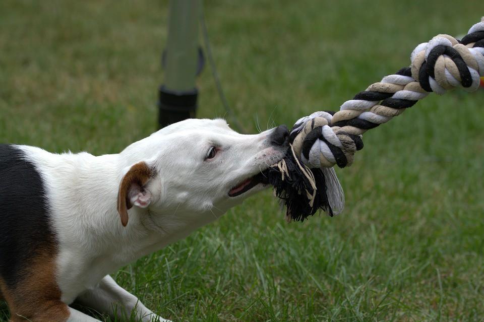 Cómo enseñarle al perro a no morder (Parte II)