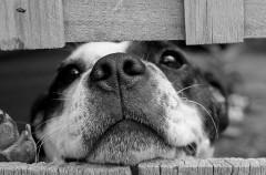 Cómo combatir la sarna de tu perro