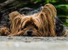 Tips para  cuidar el pelo del perro