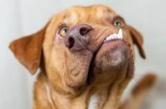 Un perro que es furor en Instagram